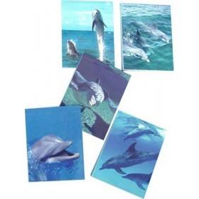 Bloc note les dauphins