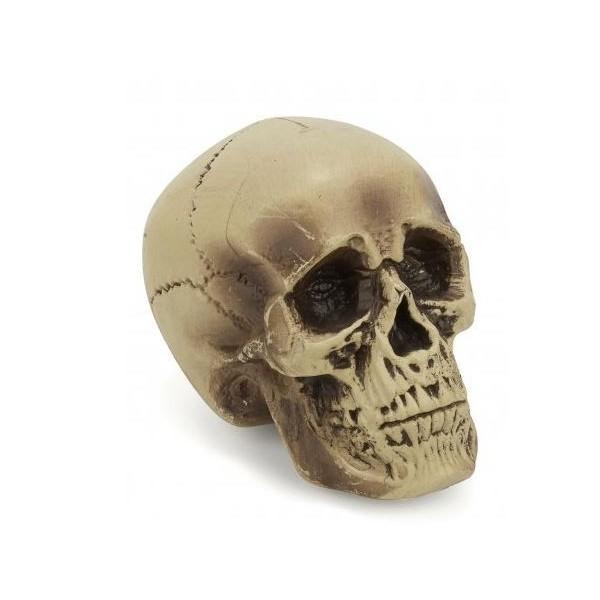 Crâne Décoration Plastique